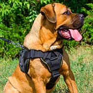 Practical Cane Corso Harness for Walking and Tracking