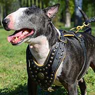 Exclusive Design Studded Royal Leather English Bull Terrier Harness