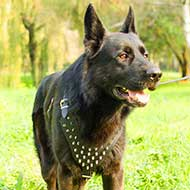 German Shepherd Spiked Dog Harness