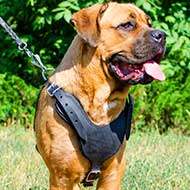 Padded Cane Corso Harness for Pulling