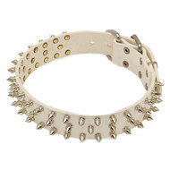 White Leather Dog Collar with 3 Rows of Nickel Plated Spikes