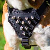 Leather English Bulldog Puppy Harness with Spiked Padded Chest Plate