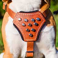 Studded Leather Dog Harness for English Bulldog Puppy