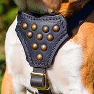 Studded Leather Old English Mastiff Puppy Harness