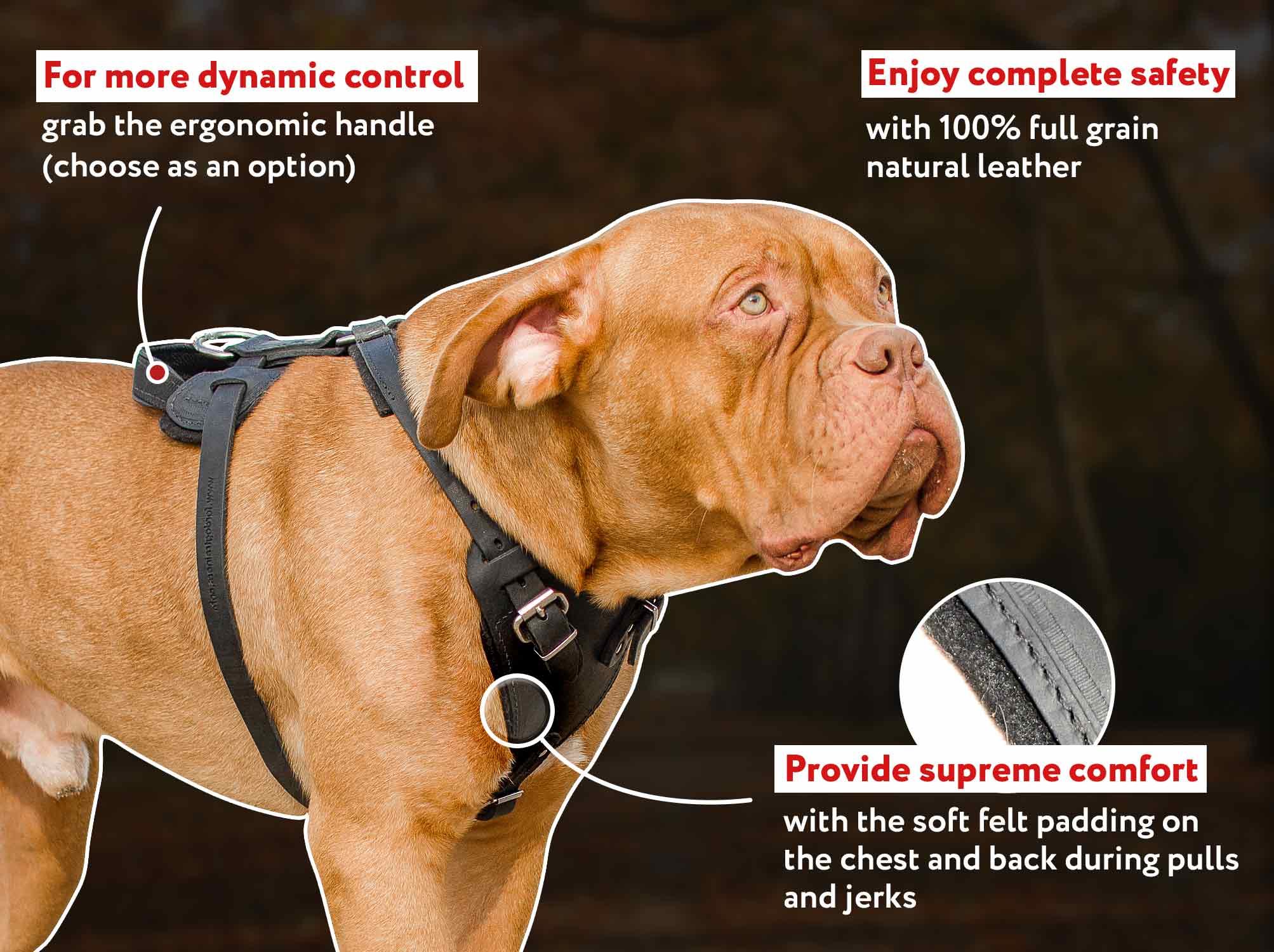 Medium Adjustable Leather Dog Harness for all Breeds