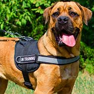 Walking Reflective Nylon Cane Corso Harness with Handle