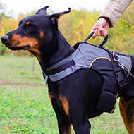 Nylon Doberman Harness for Winter Warming