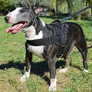 All Weather Nylon English Bull Terrier Harness for Pulling/Tracking/Walking