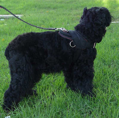 nylon dog harness for russian terrier