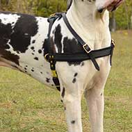 Super Comfortable Pulling/Tracking Leather Pointer Harness