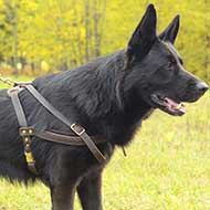 Tracking/Pulling Leather German Shepherd Harness