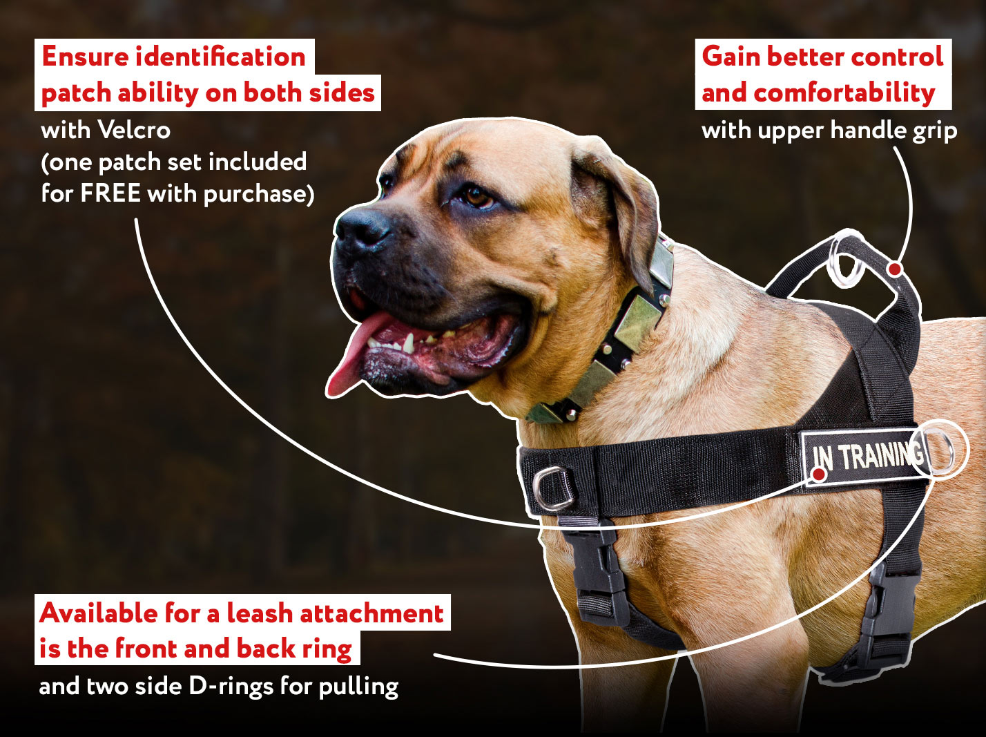 Nylon English Bull Terrier Harness for Pulling, Tracking, Training and SAR