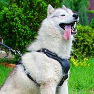 Attack/Agitation Working Siberian Husky Leather Harness