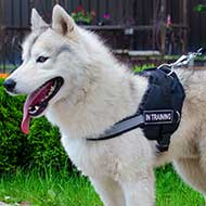 Siberian Husky Nylon Harness-Reflective Nylon Dog Harness