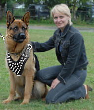 Spiked dog harness for German Shepherd, black shepherd