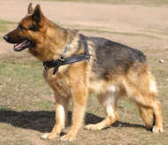 German shepherd dog harness tracking pulling dog harness