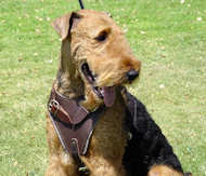 Walking Leather Airedale Terrier Harness