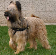 Tracking/Pulling Leather Briard Harness