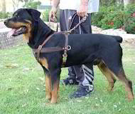tracking leather dog harness for rottweiler