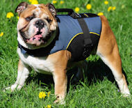 Dog Vest for Bulldog -British Bulldog Dog Coat /Dog Jacket