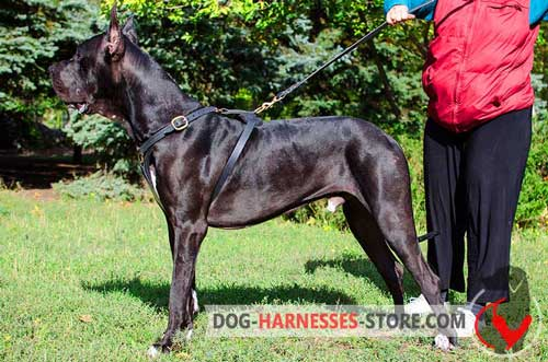 Comfy Leather Great Dane Harness For Tracking