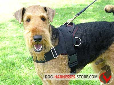 Nylon Airedale Terrier harness for pleasant walking