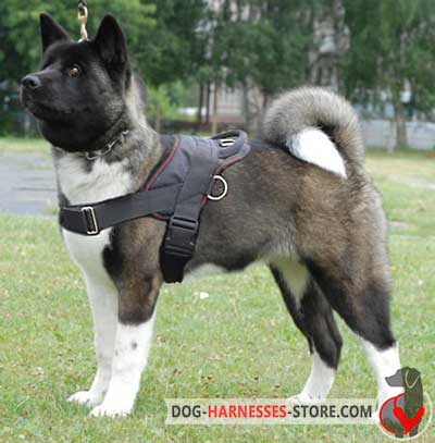 Akita Inu nylon harness for walking
