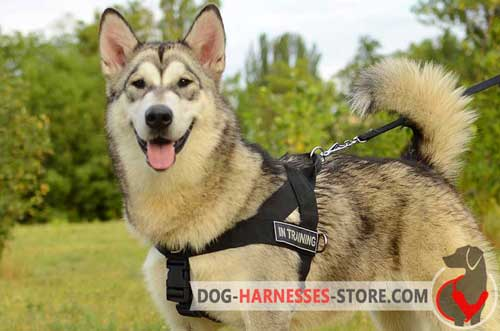 Alaskan Malamute harness with ID patches for different activities