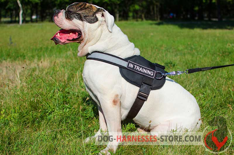 Security Dog Harness For Police And Service Dogs With