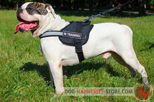 Non-rubbing nylon harness for American Bulldog