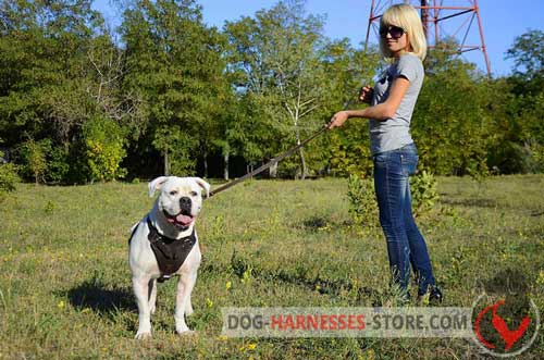 Leather American Bulldog Harness for Comfy Walking