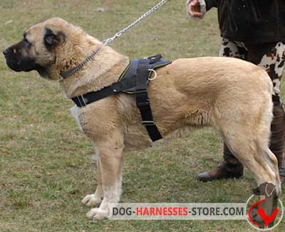 Weatherproof Anatolian Shepherd nylon harness