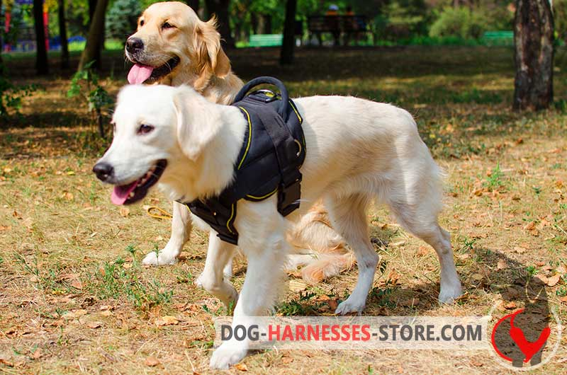 Training Nylon Harness For Golden Retriever