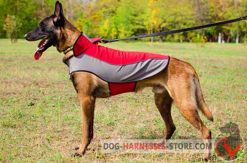 Comfortable Belgian Malinois coat for winter activities
