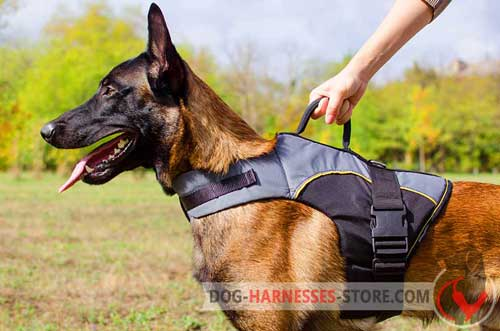 Belgian Malinois harness for outdoor activities