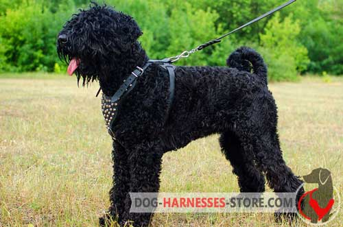 Designer leather harness with pyramids for Black Russian Terrier