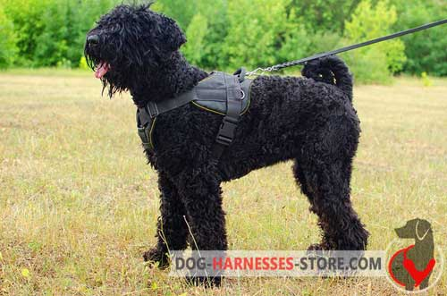 All weather nylon harness for Black Russian Terrier
