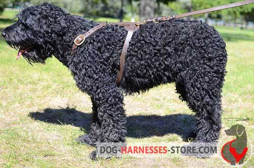 Comfortable to wear leather harness for Black Russian Terrier