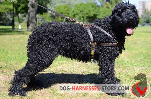 Pulling leather harness for Black Russian Terrier