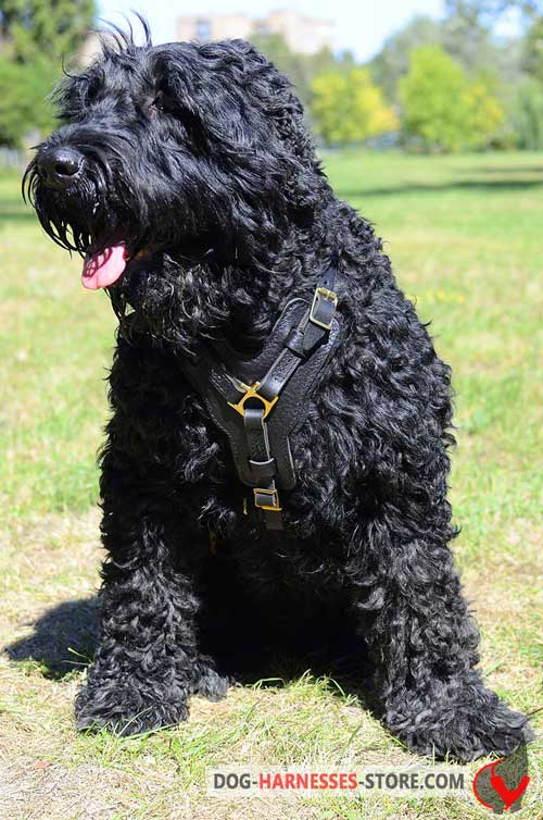 Protective leather harness for Black Russian Terrier
