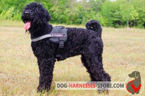 Visible at night nylon harness for Black Russian Terrier