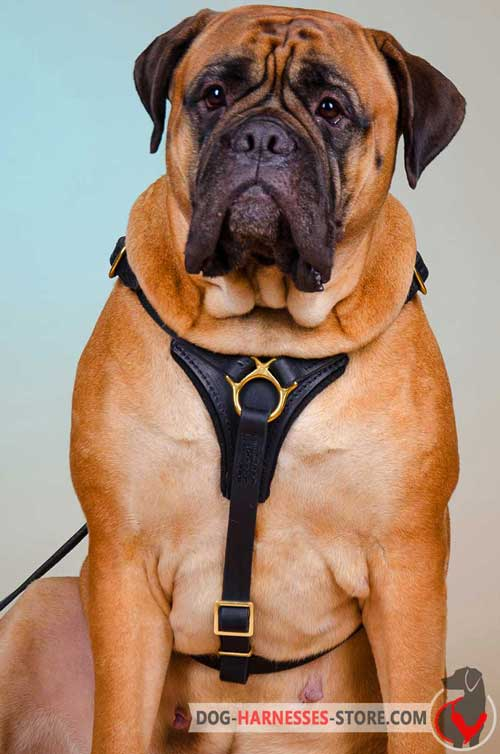 Leather Bullmastiff Harness for Free Moving