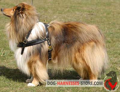 Strong Leather Collie Harness for Pulling Work
