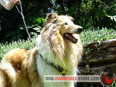 Lightweight Harness for Collie Walking and Tracking