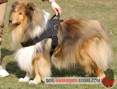 Multifunctional Nylon Collie Harness for Any Weather Conditions