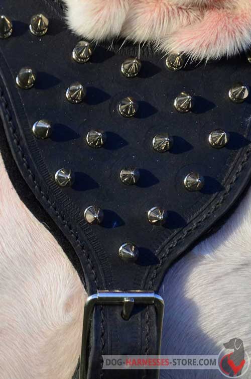Premium leather dog harness with nickel spikes