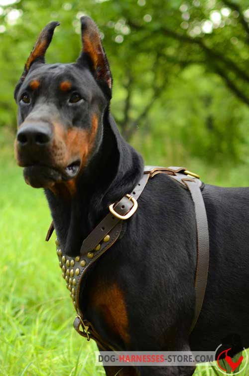 Leather Doberman Harness with Wide Adjustable Straps