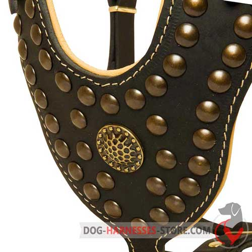 Designer leather     dog harness with shiny studs