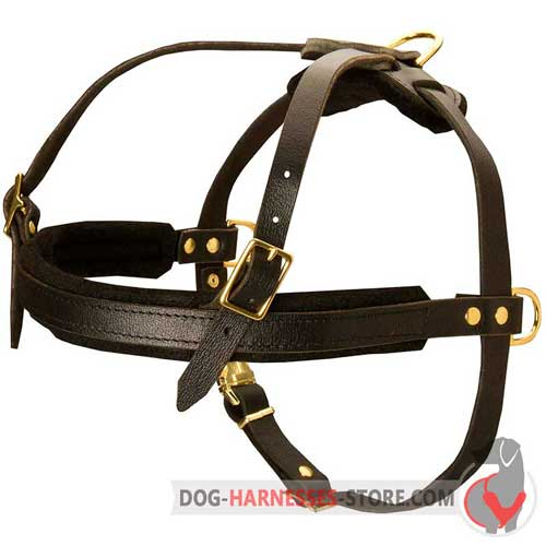 Stylish dog harness with brass fittings