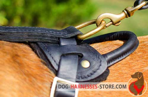 Brass D-ring to Attach A Leash